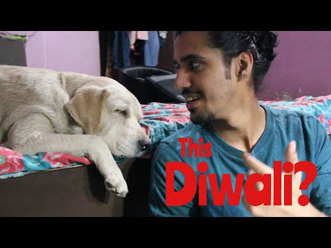 DIWALI CAN BE DANGEROUS for your DOGS | Wildly Indian