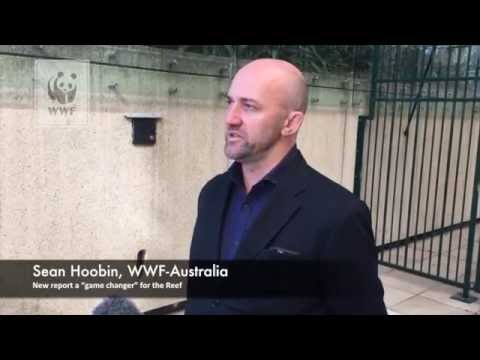 """New report a """"game changer"""" for the Reef: Sean Hoobin from WWF Australia"""
