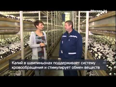 выращивание грибов дома в москве
