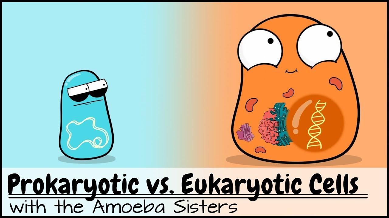 hight resolution of prokaryotic vs eukaryotic cells updated