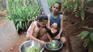 Aloe Vera ----   Healing Herbs from Heaven ---- Abhigya