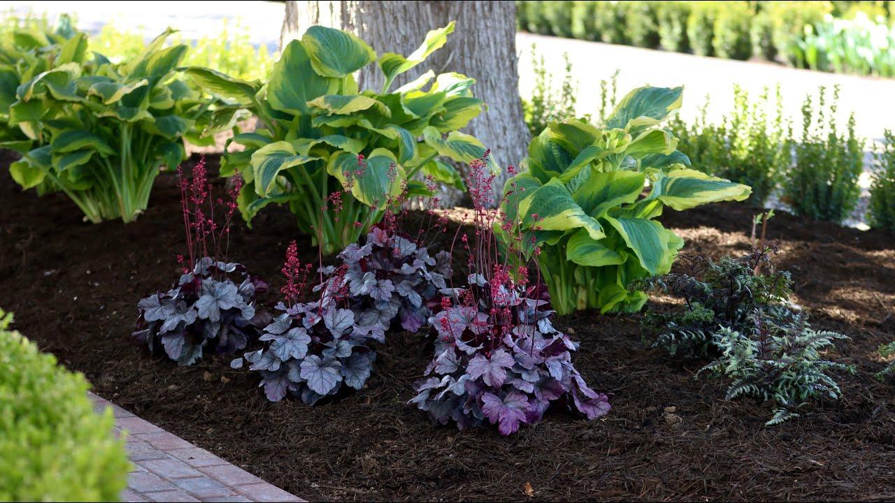 Planting Shade Loving Perennials Garden Answer Youtube