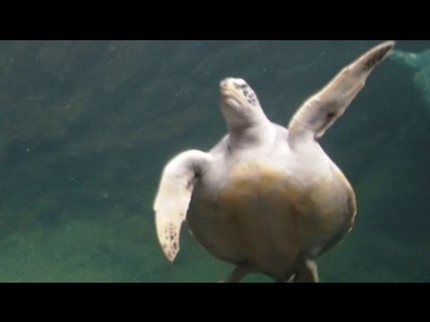♥♥ Sea Turtles