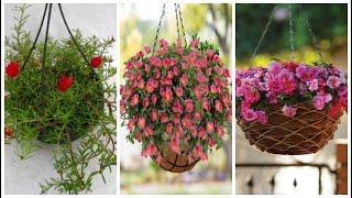 Como Plantar Onze – Horas no Vaso Pendente