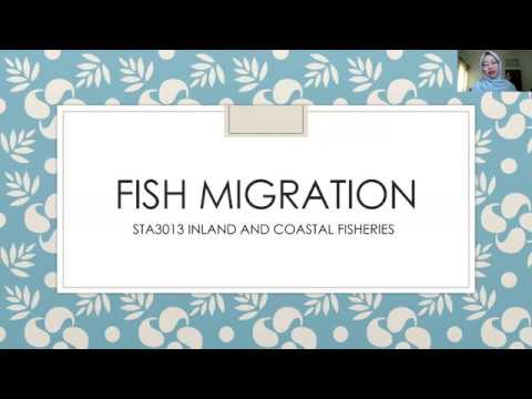 Fish Migration - STA 3013 Inland And Coastal Fisheries
