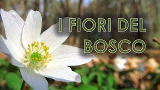 I fiori del bosco