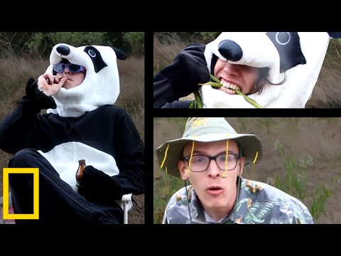 Giant Panda Mating Season | Wildlife Documentary
