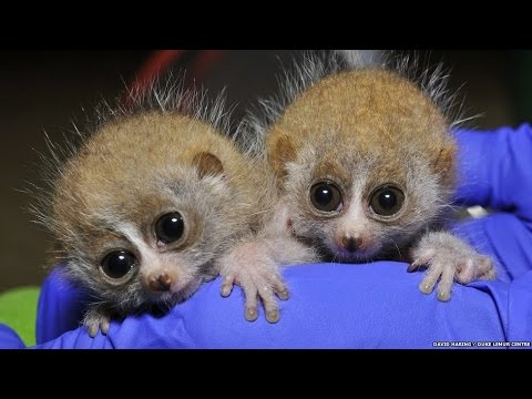 Greatest Adorable Animal Babies You Hardly Ever Get to See Of All Time - Продолжительность: 1:17