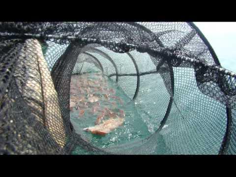 www.caucaquangbinh.com câu lông trên biển Ngoại Hải
