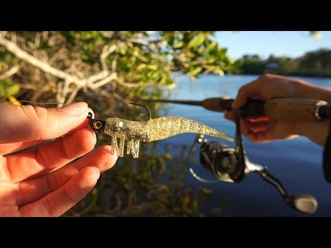 Fishing In The Mangroves - Exploring New Waters