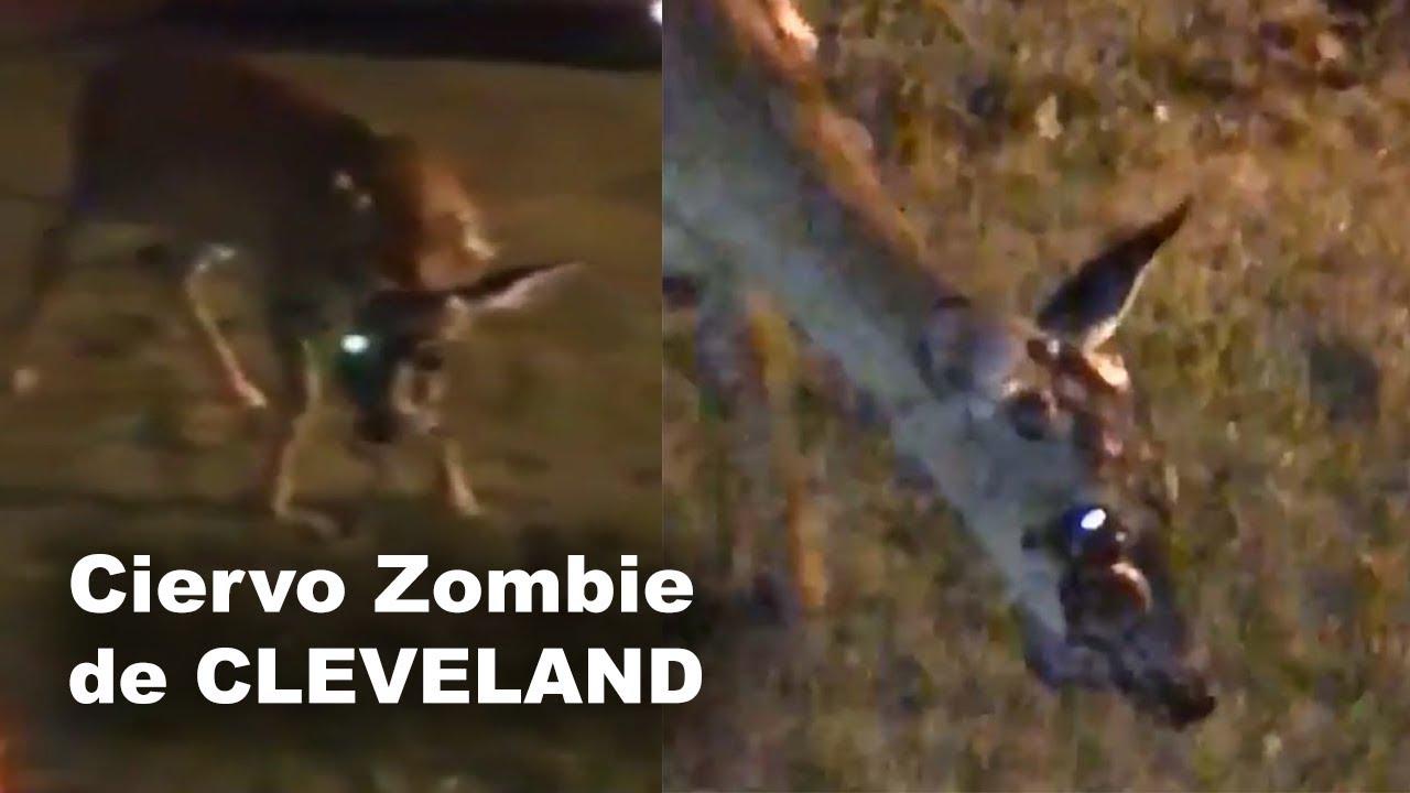 Ciervo Zombi de Cleveland | La Verdad