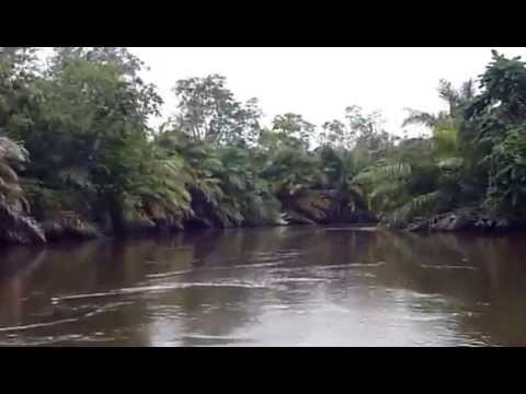 Boating Through Mangroves National Park, DR Congo , Part 1