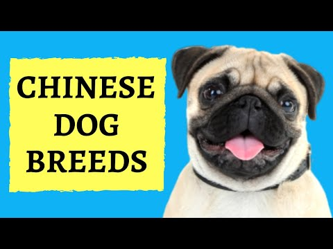 chinese-dog-breeds:-proudly-made-in-china
