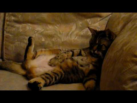 Lazy Cat Couch Potato Sits Watching Tv Youtube