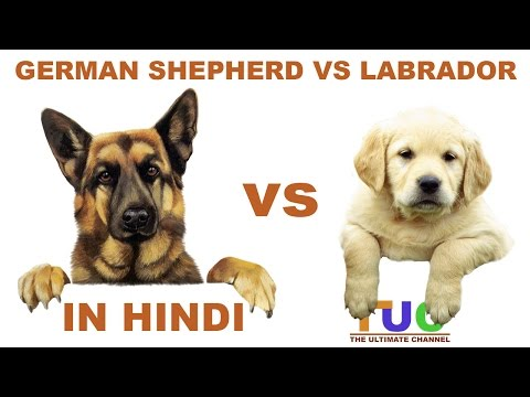 German shepherd VS Labrador in Hindi | Dog Comparison | The Ultimate Channel