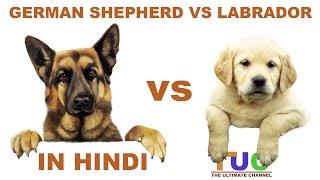 German shepherd VS Labrador in Hindi | Dog Comparison | The Ultimate Channel