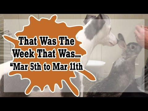 VLOG - That Was The Week That Was Mar 5th to Mar 11th 2017