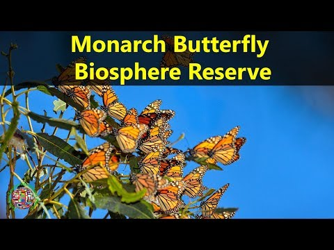 Best Tourist Attractions Places To Travel In Mexico |Monarch Butterfly Biosphere Reserve Destination