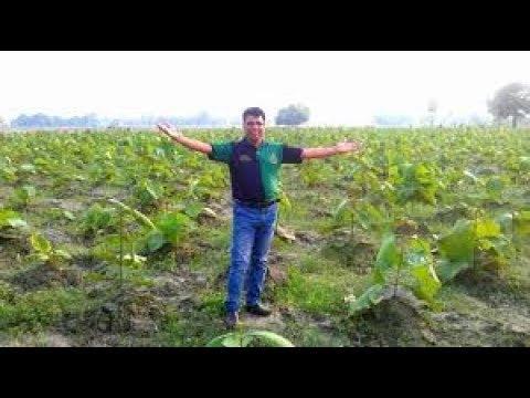 Teak Wood Cultivation Makes you a Crorepati