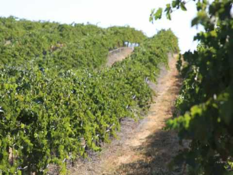 California Vineyard For Sale - Wine Real Estate - VineSmart