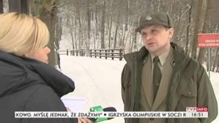 Wilki atakują zwierzęta hodowlane (Puls Polski TVP Info, 29.01.2014)