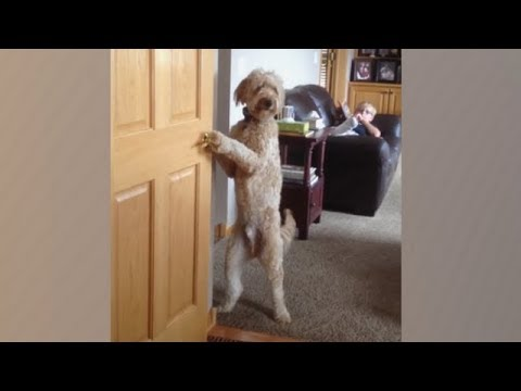 LAUGH at EVERY VIDEO! - Best FUNNY ANIMALS EVER!