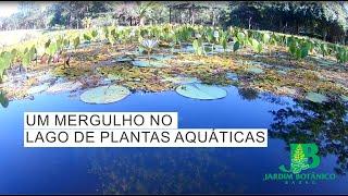 #02 PROJETO BASTIDORES: LAGO DE PLANTAS AQUÁTICAS