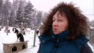 видео Туры на Новый год 2017 в Карелии: катание на хаски и снегоходах, экскурсии.