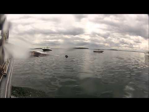 Dead Finback Whale Off Gallops Island