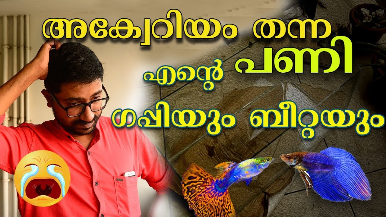 ??അക്വാറിയം തന്ന പണി? Guppy | Aquarium Making Failed?? | Guppies And Betta Fish Care | Ep 01