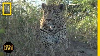 Safari Live - Day 348   National Geographic