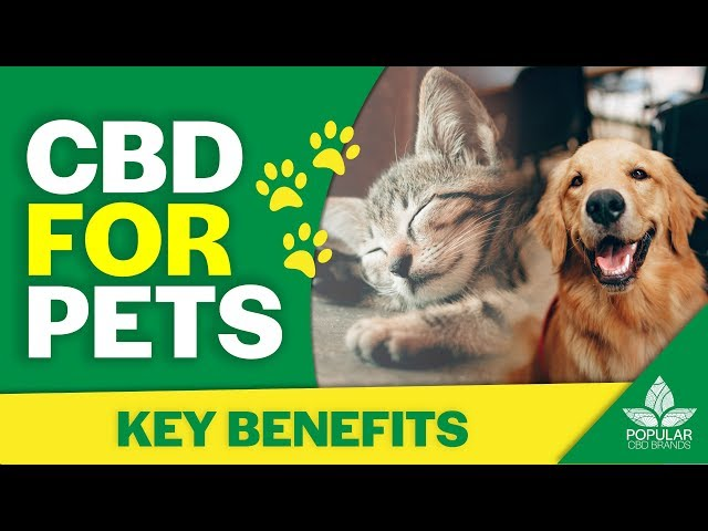 CBD for Pets   Benefits for Dogs and Cats (2019)