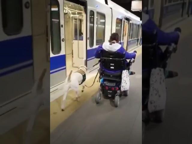 Service Dogs and Public Transportation | Aspen Service Dogs