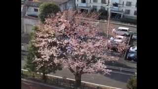 東京都立日野台高等学校創立30周年記念DVD