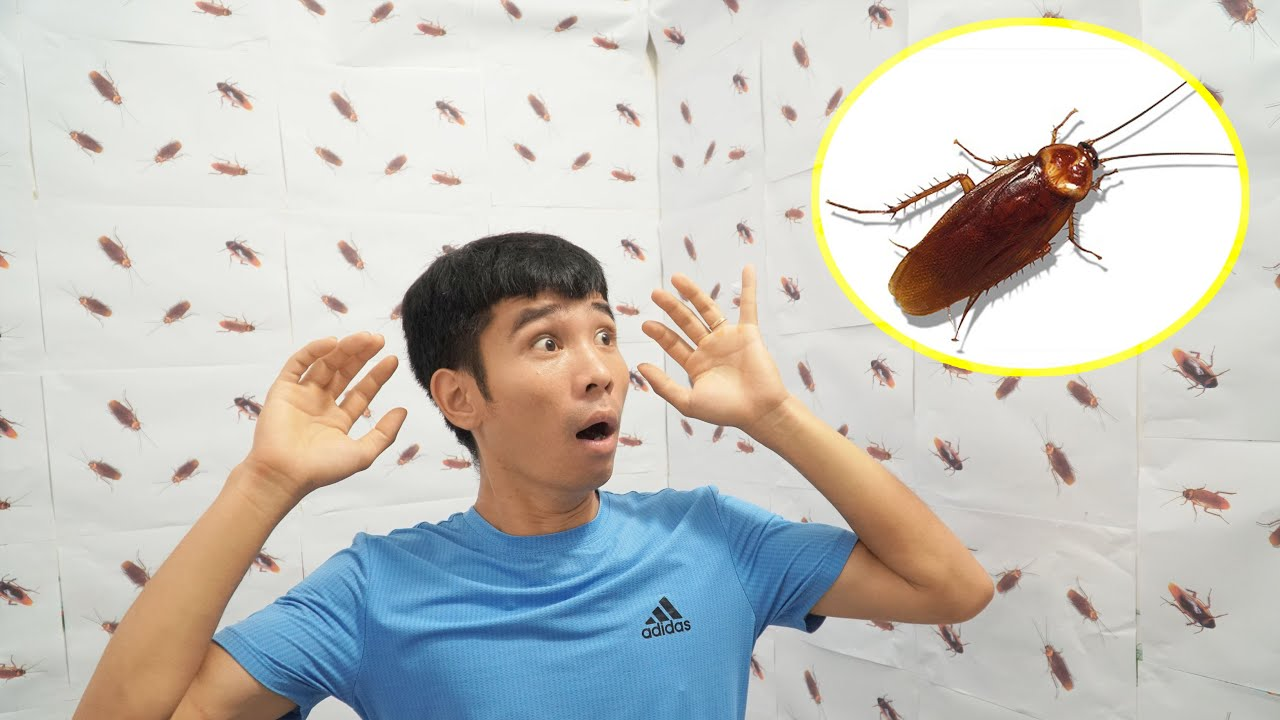 Thả 1000 Con Gián Troll Vợ | Cockroach | PHD Troll