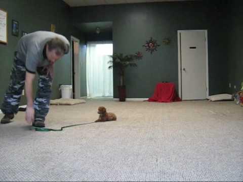 Dog Training Cape Coral