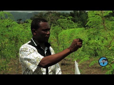 Togo: The Magic of Moringa