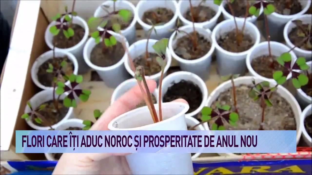 plante naturale de ardere grase