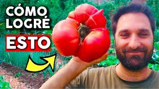 12 trucos para cultivar tremendos tomates. Poda y Fertilización @cosasdeljardin