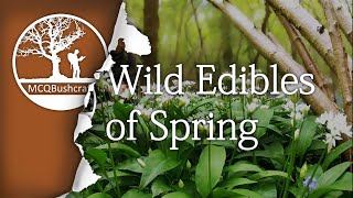 Bushcraft Foraging: Wild Edibles of Spring