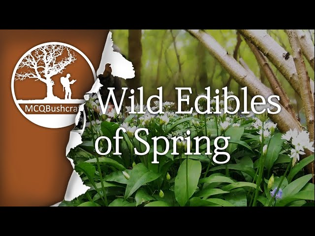 Bushcraft Foraging Wild Edibles of Spring