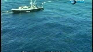 tuna boat kills many dolphins