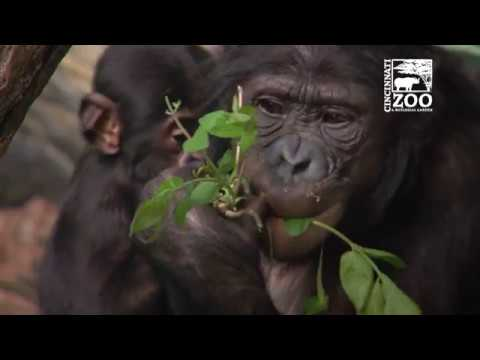 What Does it Take to Feed All the Animals - Cincinnati Zoo
