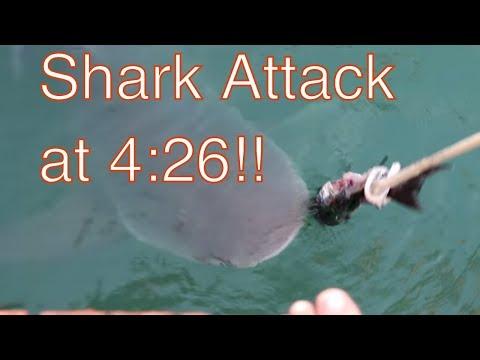 A Shark attacks and a quick tour around Freeport / Port Lucaya while cruising Bahamas Leoapard 39