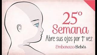 cuantos son 25 semanas de embarazo en meses