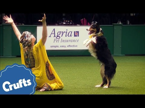I Wanna Dance With Some Doggy - Amazing Dancing Dogs