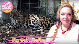 Gambar cover Big Cat Briefing 03 29 2020