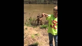 Queen snake catch