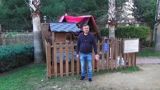 Аланья, Турция: кошачье царство
