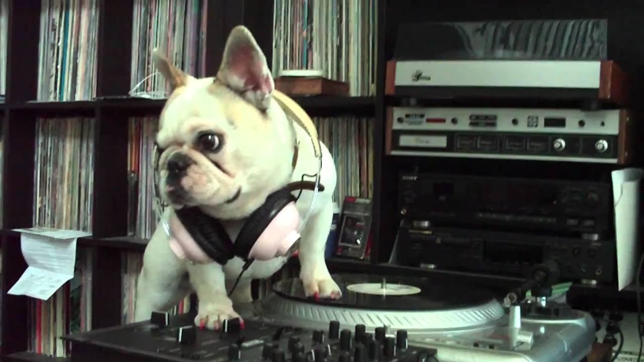 Dj mama the french bulldog wont get off the turntables youtube nvjuhfo Choice Image